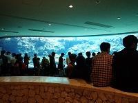 沖縄美ら海水族館(沖縄海洋博公園)
